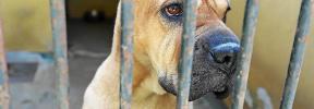 El abandono de animales en Palma se reduce este verano