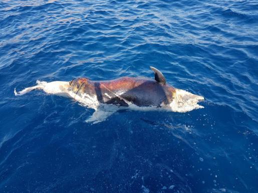 Delfín muerto cerca de Cala Mondragó.