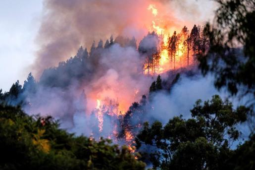 Un dispositivo de emergencia trabaja en la extinción de un incendio en el municipio de grancanario de Valleseco.