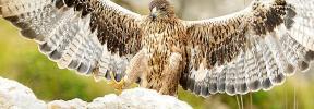 Animales de Mallorca, antes nocivos y ahora protegidos