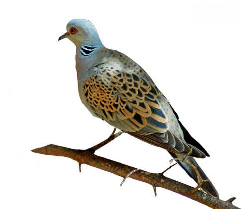 La propuesta prevé reducir a un único mes el periodo permitido de caza, del 15 de agosto al 15 septiembre, para ajustarse así a las medidas que reclama la Comisión Europea.