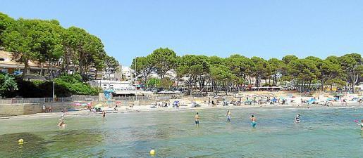Esta playa de Peguera conserva parte de su antiguo pinar.