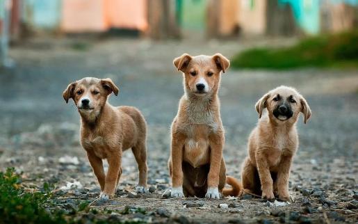 Se investiga el caso como constitutivo de un delito de maltrato animal.