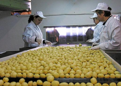 La patata es uno de los productos que exporta Baleares.