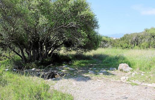 Vista general de la zona arqueológica ya comida por la vegetación y repleta de residuos hace un año.