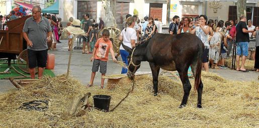 La gran muestra de animales y variedades autóctonas no dejó indiferente a nadie.