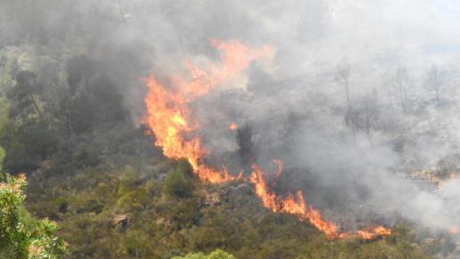 Andratx es uno de los municipios que, durante 2019, ha sufrido un incendio forestal.