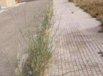 Falta de limpieza y hierbajos en el Camí de Génova