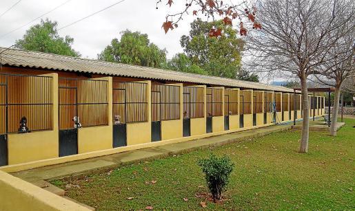 Imagen de algunas de las 110 jaulas de perros de que dispone el centro de protección de animales de Son Reus.