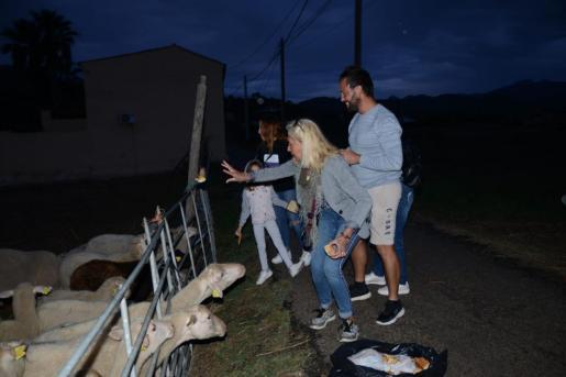 Un grupo de vecinos acude a dar de comer a unas ovejas abandonadas por su dueño en Andratx.