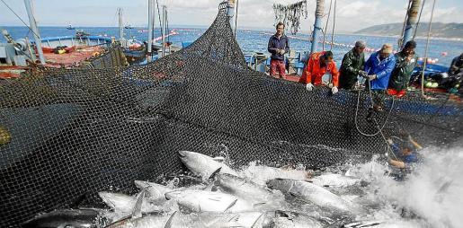 El Palacio de Congresos se convertirá este mes en la capital de la pesca mundial.