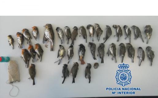 Imagen de las aves intervenidas a un cazador en Jaén.