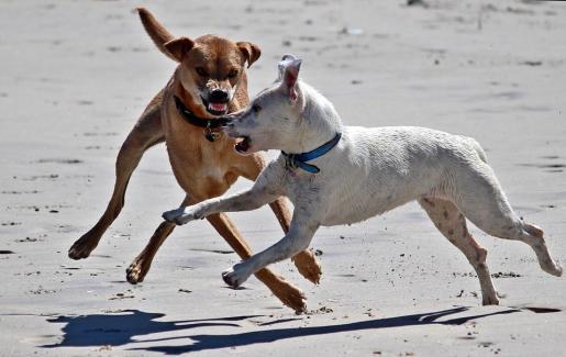 La justicia está analizando tanto a los perros que participaron en la cacería como a los propios canes de la víctima.