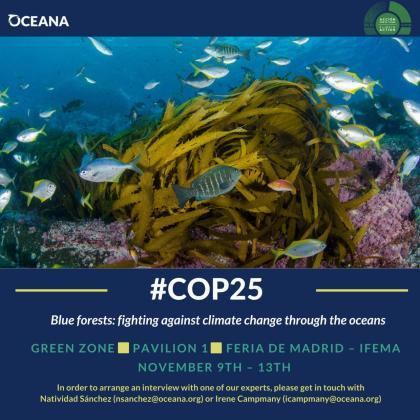 La entidad global, cuya sede para Europa está en Madrid reclama a la comunidad internacional que «se incluyan los bosques de algas en las estrategias oficiales para combatir el cambio climático».