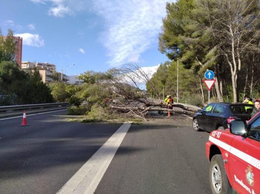 Un árbol en mitad de la vía ha obligado a cortar la circulación en la autopista.