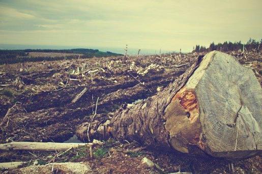 La deforestación en el Amazonas ha crecido un 103 % desde 2018 y casi supone el tamaño de Puerto Rico.