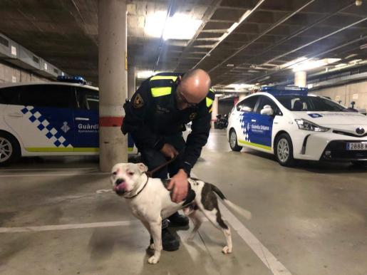 Uno de los agentes de la Guàrdia Urbana con el perro.