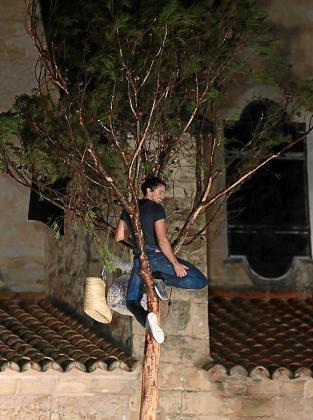 En el Pi de Sant Antoni 2019 ya no había gallo en la cesta.