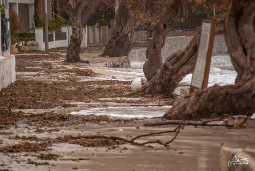 El temporal ha causado destrozos en el Port de Pollença.