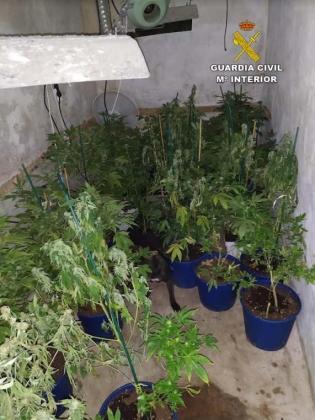 Imagen de la plantación de marihuana localizada en Llucmajor.
