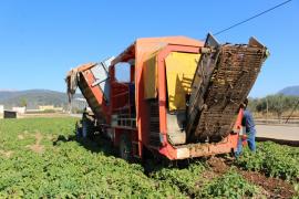 Los productos agrícolas multiplican su precio por más de cuatro del campo a la mesa