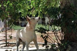 Los abogados piden que el Govern multe con 100.000 euros el maltrato animal