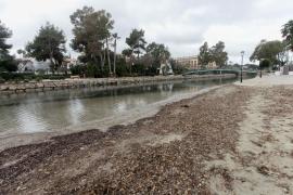 El mal estado del río de Santa Eulària. en imágenes (Fotos: Daniel Espinosa).
