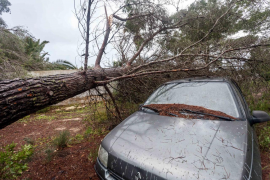 El Gobierno destina 4,4 millones a reparar los daños causados por 'Gloria' en Baleares
