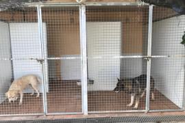 Denuncian que los perros enfermos de la Unidad Canina no son atendidos