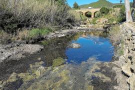 La posidonia retirada del río se ha llevado a un punto de acopio para que se seque