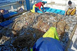 Pescadores de Mallorca denuncian el aumento «insostenible» de balas de paja en el mar