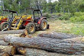 El Ajuntament pide un informe al Govern sobre una tala de pinos en Son Jaumell