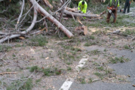 Cerrada la carretera de Caimari a Lluc por la caída de un pino