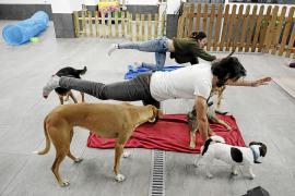 El 'dog yoga' llega a Mallorca
