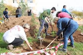 Siembran 300 árboles y plantas en Palma contra el cambio climático