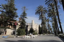 Cort prohíbe el paso a los peatones por el Passeig Sagrera por el fuerte viento