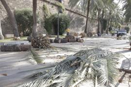 Los operarios trabajan en la retirada de las palmeras caídas