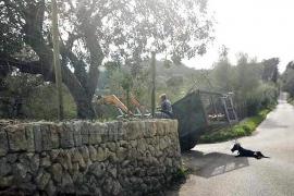 Investigado por arrastrar a un perro con un tractor en Montuïri