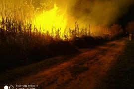 El fuego en s'Albufera quema 16 hectáreas de cañizo