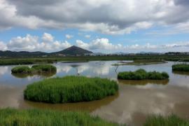 Medi Ambient levanta acta a pescadores furtivos en S'Albufera y a un acampado en la Serra