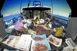 La mitad de la flota pesquera de Mallorca se queda en tierra ante la bajada de demanda
