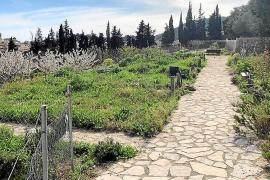 Los huertos urbanos de los 'marges' de Son Tugores volverán a revivir