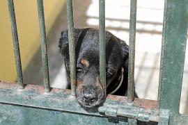 La alerta sanitaria reduce a más de la mitad el abandono de animales en Mallorca