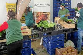 Camp Mallorquí: un 'Amazon' de fruta y verdura