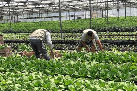 Agricultura invierte 1,8 millones de euros para frenar la caída de ventas del sector