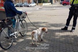 Denunciada por circular en bicicleta con su perro cojo atado al manillar a un kilómetro de su casa