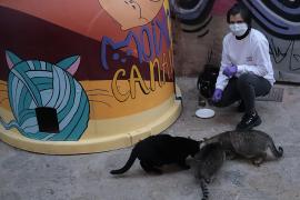 Mercedes Argüello: «En unos meses habrá gatitos por todo»