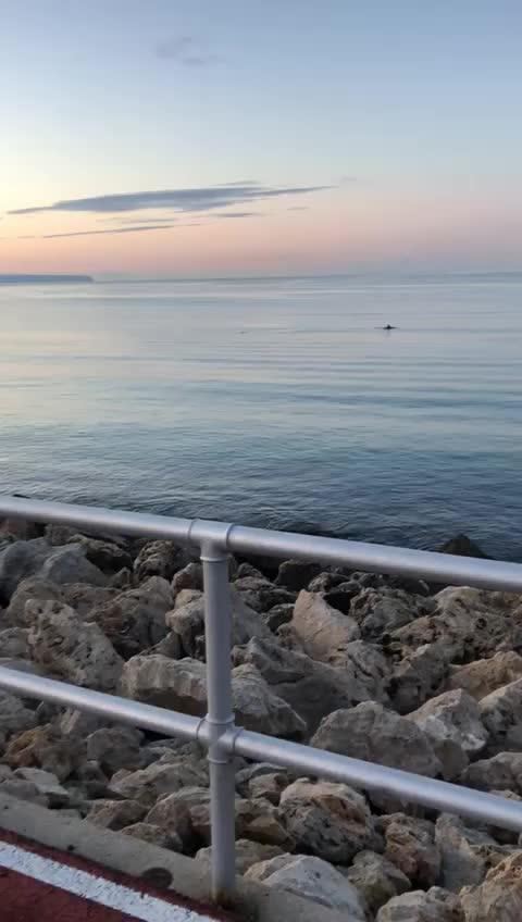 Los delfines visitan la costa de Mallorca durante el confinamiento