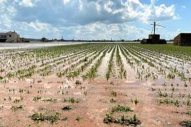 Una intensa granizada provoca grandes destrozos en la cosecha de patata