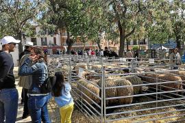 La cuarentena obliga a cancelar la Fira agrícola y las fiestas de Sant Marc